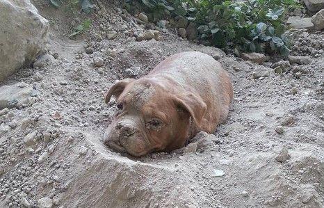 Detienen a uno por enterrar viva a su perra - Foto de Pedro Dinis/Facebook