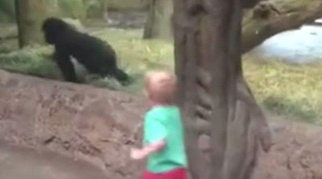 Video: niño juega con chimpancé en zoológico - Foto de YouTube
