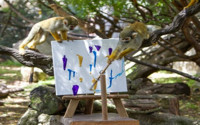 Animales pintan cuadros para subastarlos - Foto sfgate