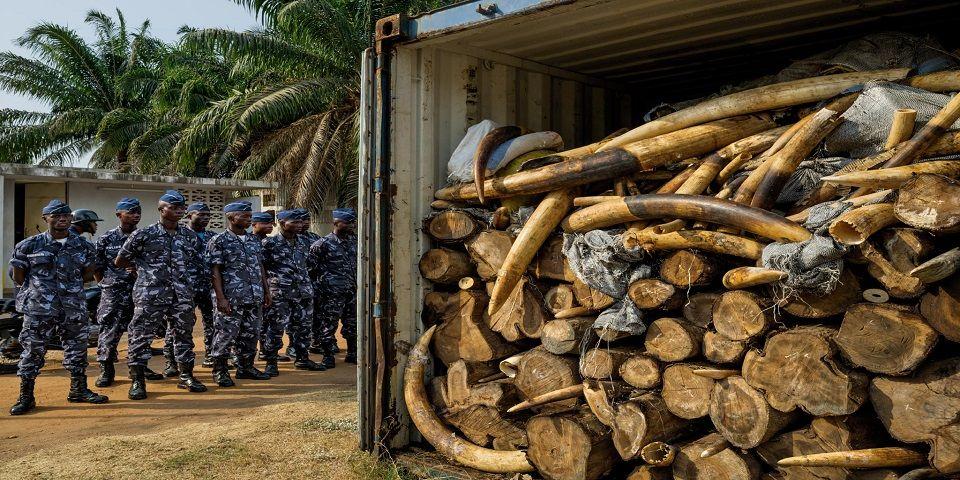 Elementos de Kony matan a elefantes en el Congo