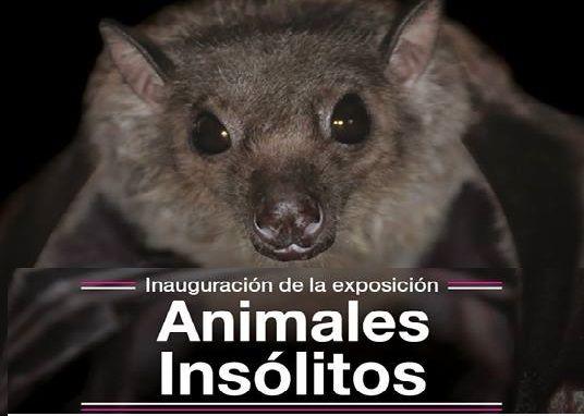 Inauguran exposición Animales Insólitos en Museo de Historia Natural