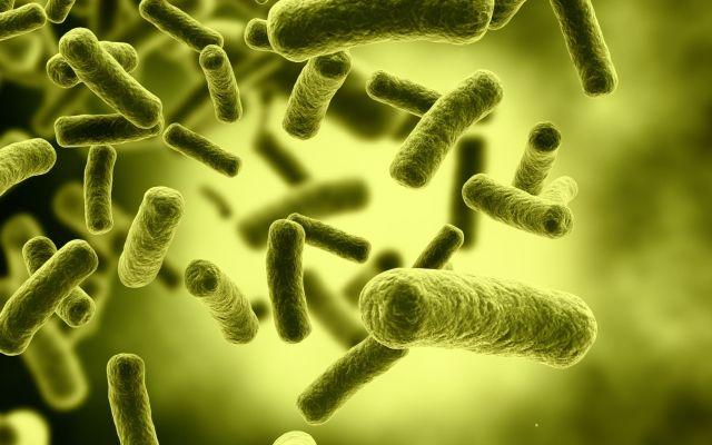 Aumentan casos de E. Coli en EE.UU. por restaurante Chipotle - Bacteria Cells with selective focus