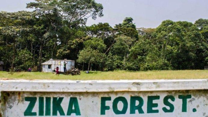 ¿Dónde nació el virus del Zika? - Foto de Internet