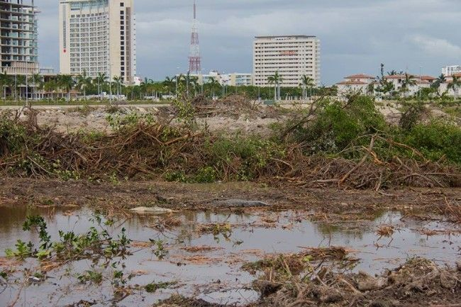 Juzgado dicta suspensión definitiva a obras en manglar Tajamar - Foto de Animal Político