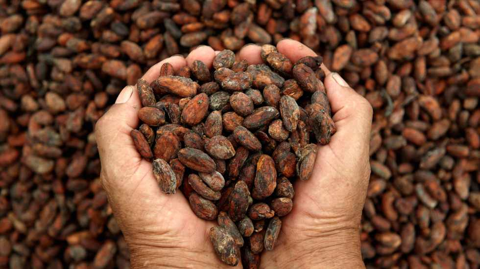 Beneficios del cacao para nuestro cuerpo - Foto de Internet