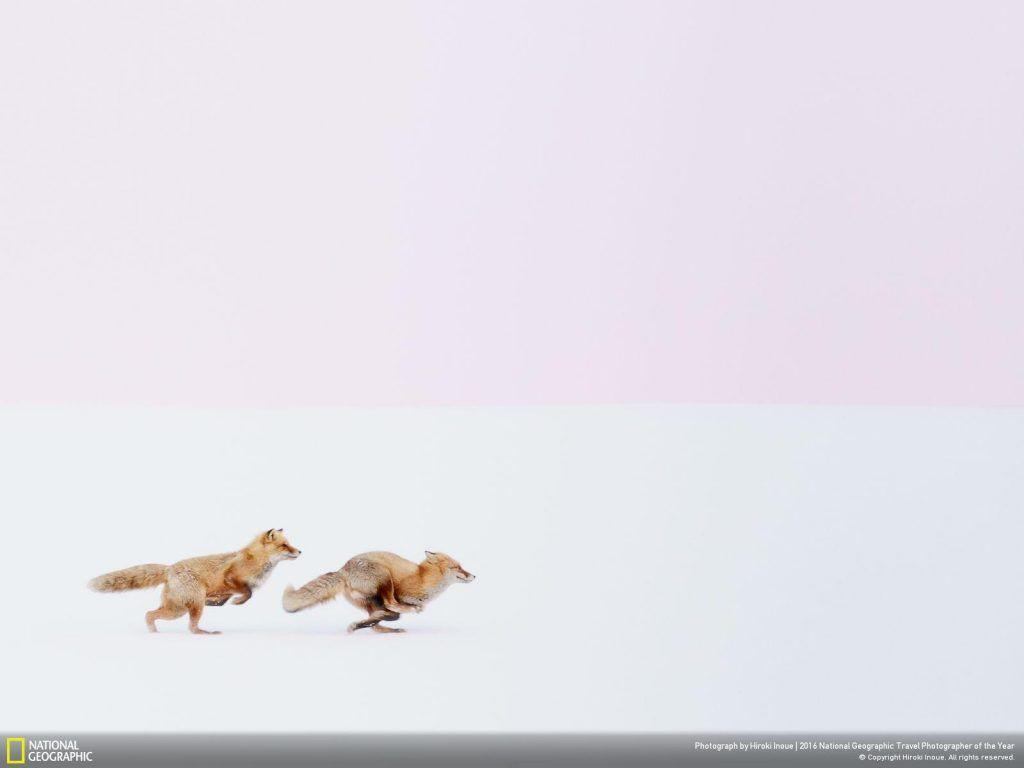 Foto de Hiroki Inoue / National Geographic.