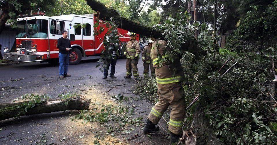 Cae árbol de 7 metros en la colonia Condesa