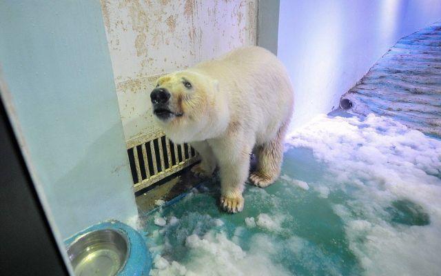"""Pizza, el """"oso más triste del mundo"""" será enviado a un parque oceánico - Foto de Mail Online"""