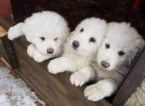 Rescatan a tres cachorros en avalancha de hotel en Italia