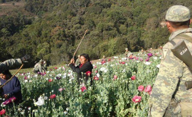 Agreden a militares que destruían plantío de amapola