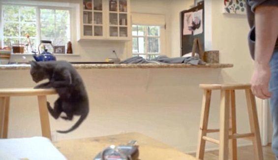 El video de PETA que causa indignación
