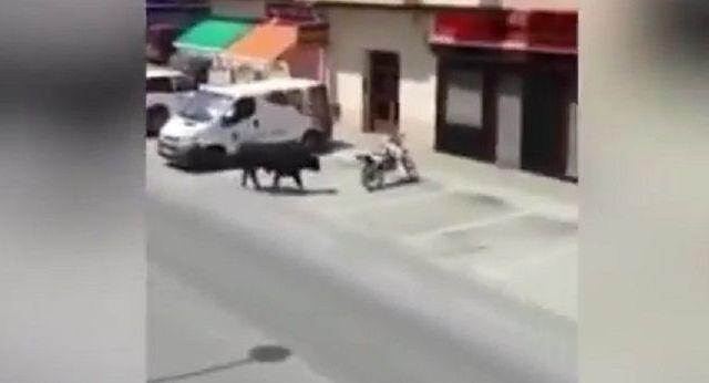#Video Toro causa destrozos en calles de España