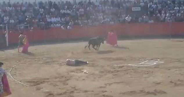 #Video Toro embiste a defensor de los animales en Francia