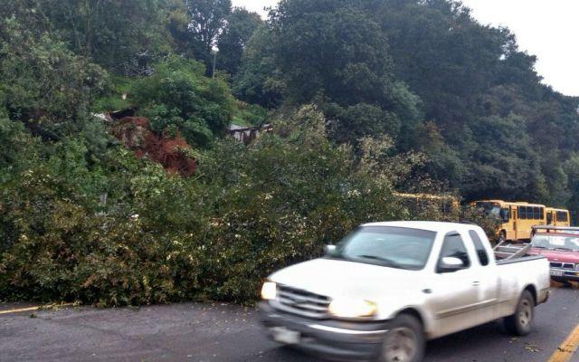 Caída de árbol provoca cierre de carriles en la México-Toluca