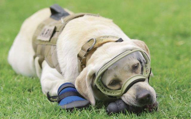 La Marina adiestra a perros rescatistas sucesores de Frida - Foto de Crónica