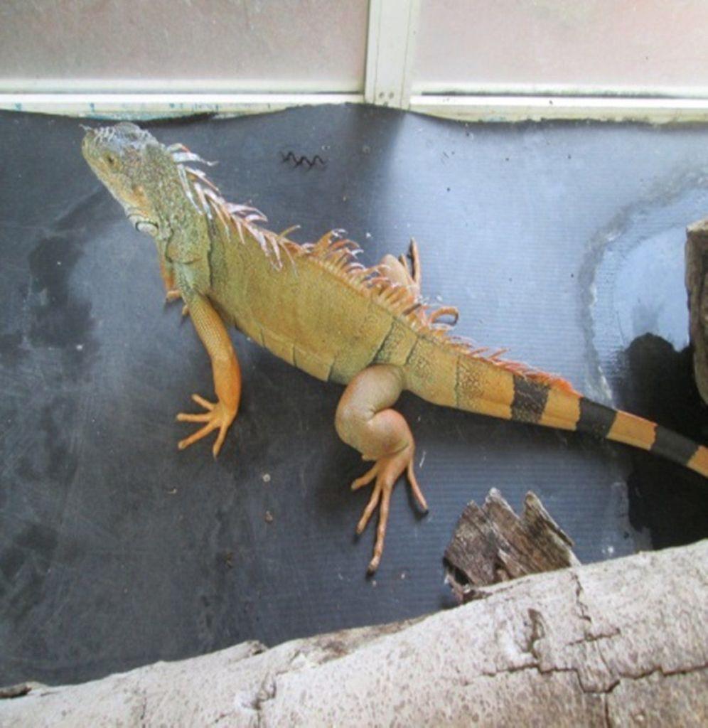 Aseguran animales exóticos en la GAM - Foto de Profepa