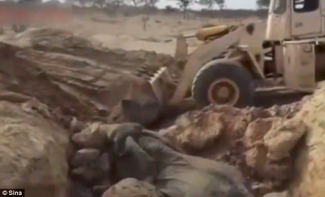 #Video Rescatan a familia de elefantes con retroexcavadora - Foto de Sina