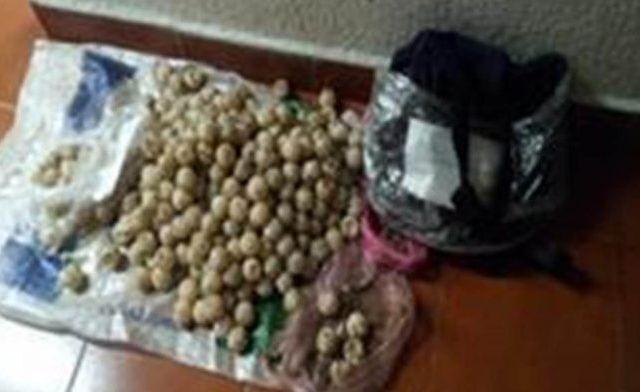 Decomisan 315 huevos de tortuga en Guerrero - Foto de Quadratín