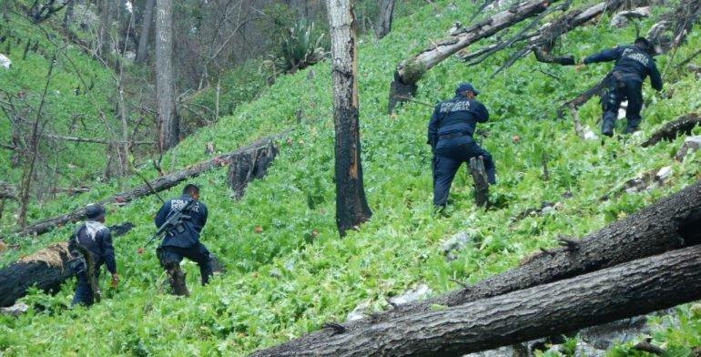 PF destruye 12 sembradíos de amapola en Guerrero - Foto de Quadratín
