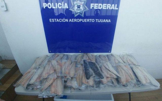 Aseguran 104 filetes de Totoaba en aeropuerto de Tijuana - Foto de @PROFEPA_Mx