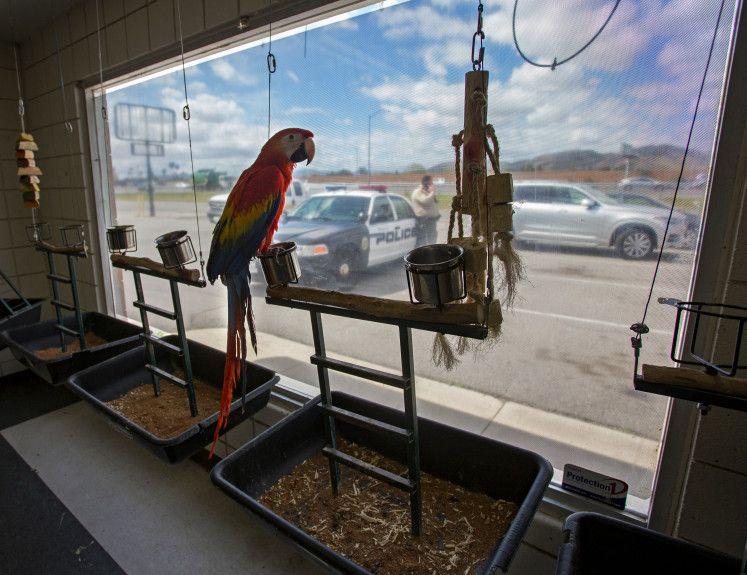 Roban seis aves valuadas en miles de dólares - Foto de The Press Enterprise