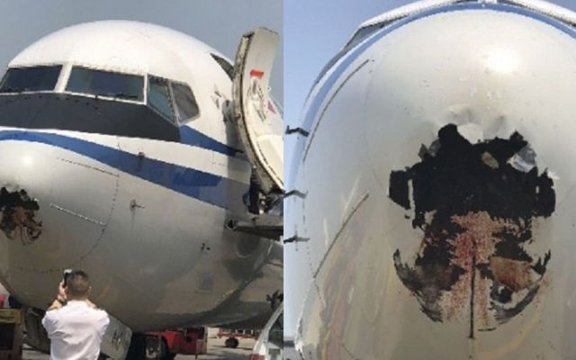 Avión termina con la nariz destrozada tras choque con ave - Foto de Internet