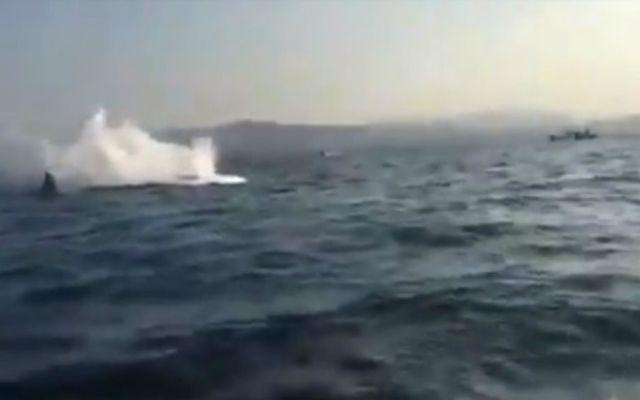 #Video Ballena embiste a embarcación en Puerto Escondido - Foto: Youtube.