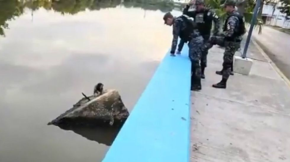 #Video Salva Policía Federal a perro de morir en aguas residuales - Foto: @PoliciaFedMx.