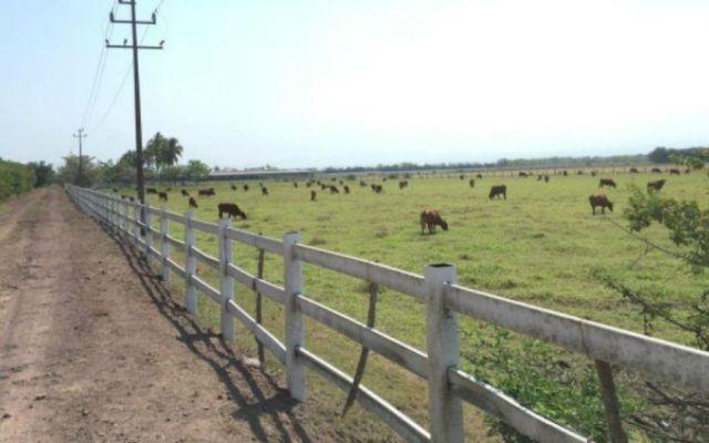 Aseguran rancho de exgobernador Roberto Sandoval - Foto: @RodrigoGBarrios.