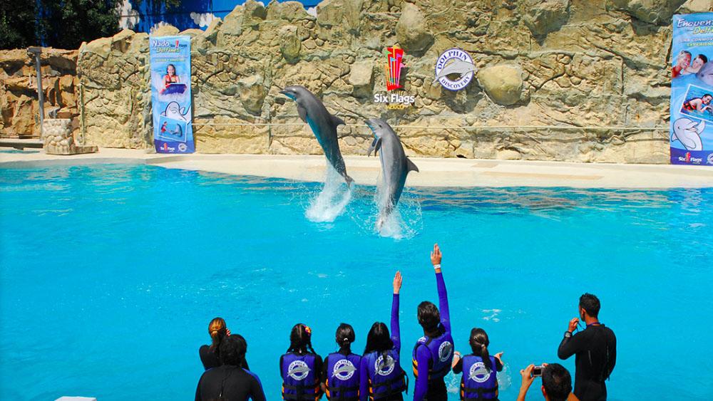 Prohíben utilizar delfines en espectáculos de la Ciudad de México