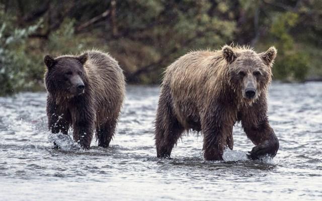 Foto de Getty Images