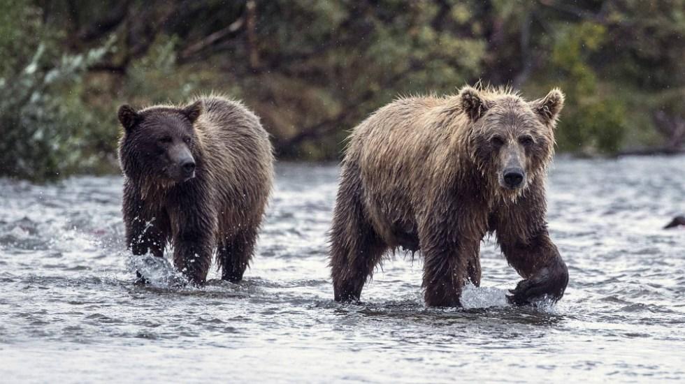 Aprueba Trump legislación para cazar osos con donas y tocino en EE.UU. - Foto de Getty Images