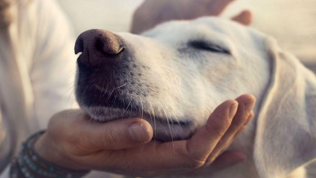 ¿Cuál es la verdadera edad de los perros? - Foto de internet