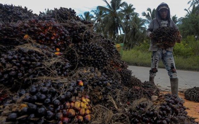 Los riesgos del uso del aceite de palma - Foto de internet