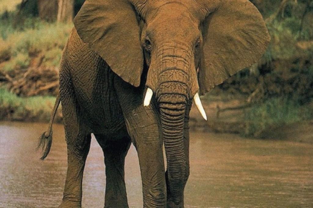 Diez animales en peligro de extinción - http://dforceblog.com