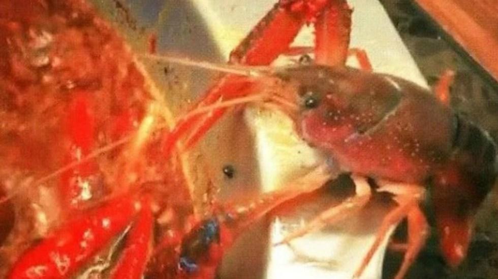 #Video Cangrejo se corta pinza para escapar de olla hirviendo - Foto de Taiwan News