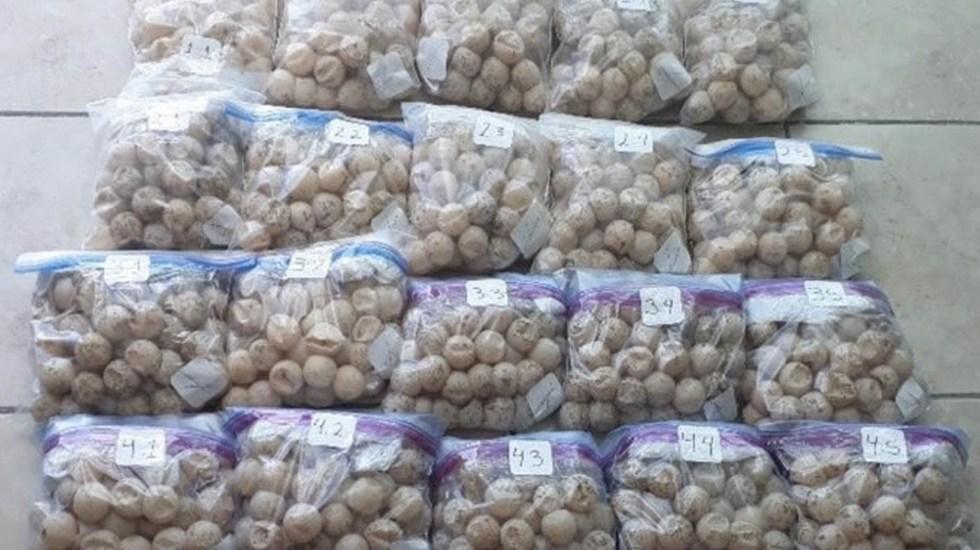 Destruyen mil 557 huevos de tortuga golfina decomisados en mercado de La Viga - Foto de Quadratín