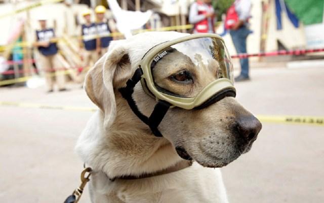 Frida rescatista entre los mejores perros del 2019 - Foto de internet