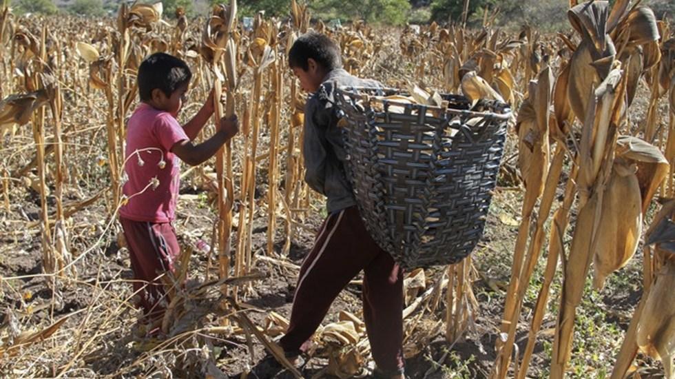 Al menos 2.1 millones de niños en México trabajan en ocupaciones no permitidas - Foto de Crónica MX