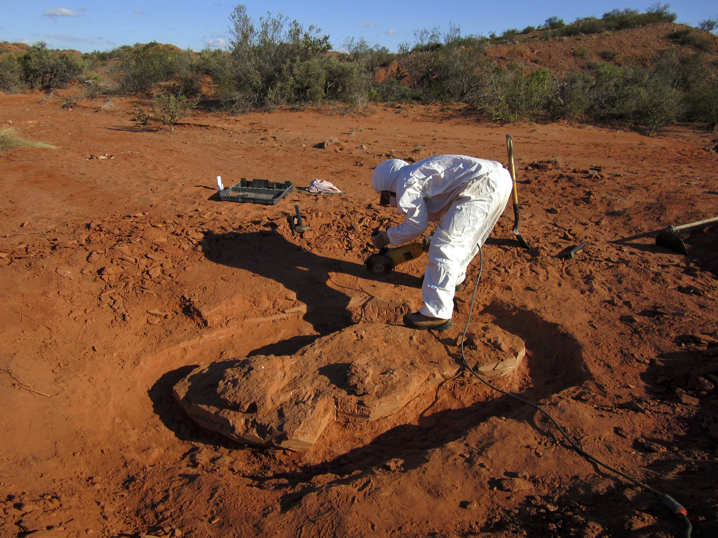 Descubrieron restos de un dinosaurio gigante y antiguo