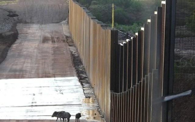 Cierra campaña para financiar el muro fronterizo - Foto de Defenders of Wildlife