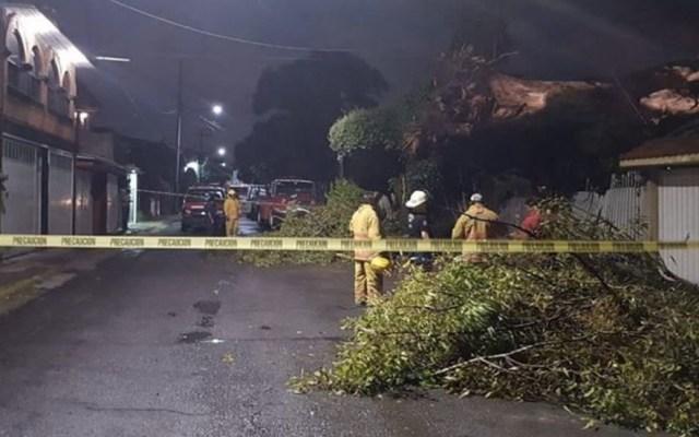 Árbol se desploma en casa de Cuautitlán Izcalli - Foto de Quadratín