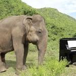 #Video Elefante ciega baila cuando pianista toca Bach