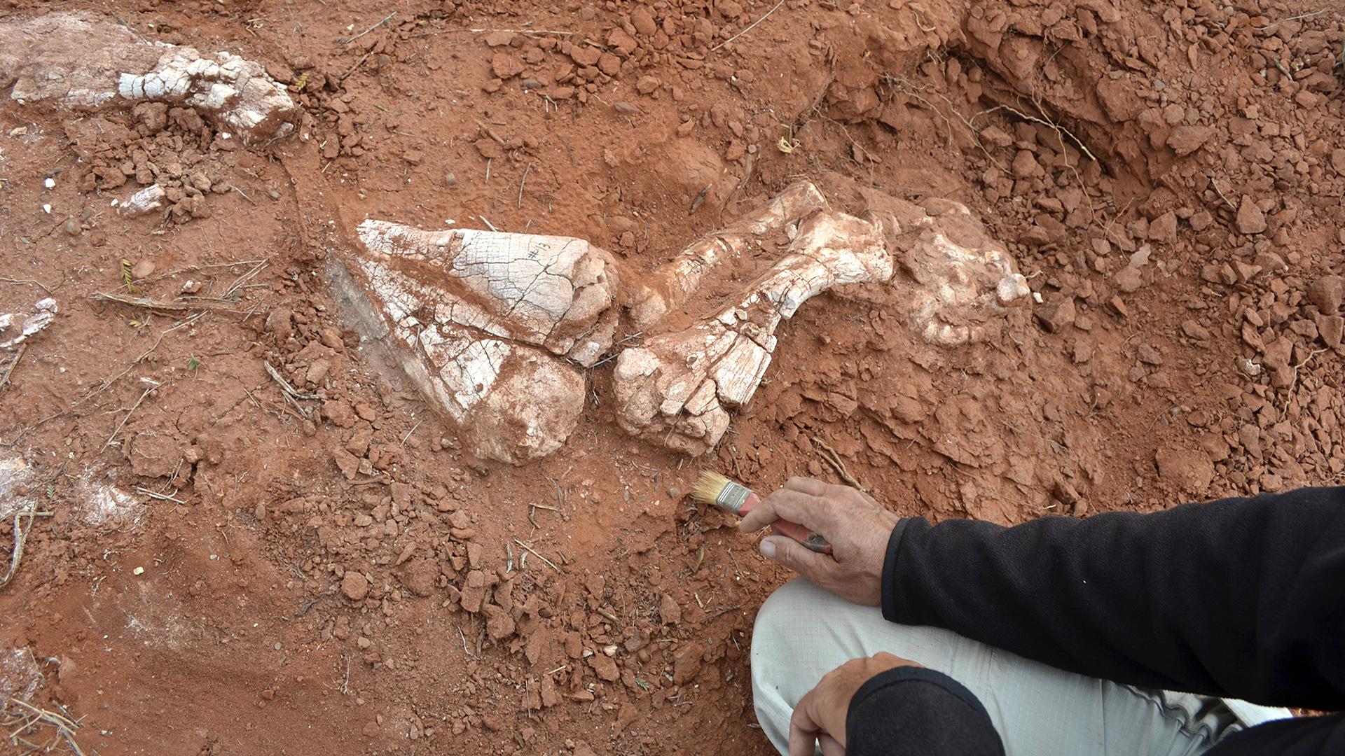 Descubren fósiles de dinosaurio gigante más antiguo