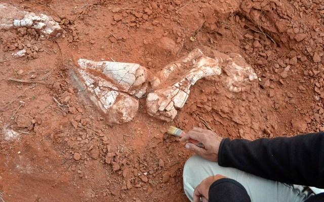 Descubren restos de dinosaurio gigante en Argentina - Foto de AFP