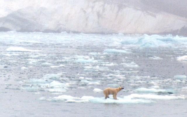 Guardias de crucero turístico matan a oso polar en recorrido - Foto de @fantasma