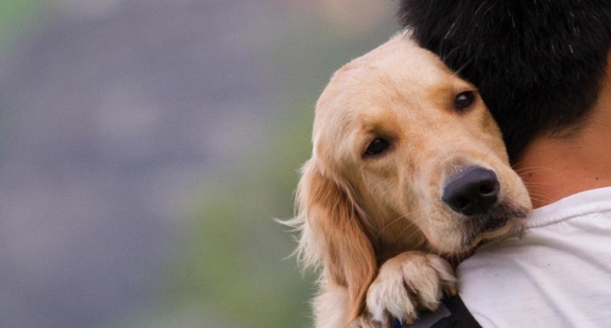 Perros detectan angustia emocional de sus dueños