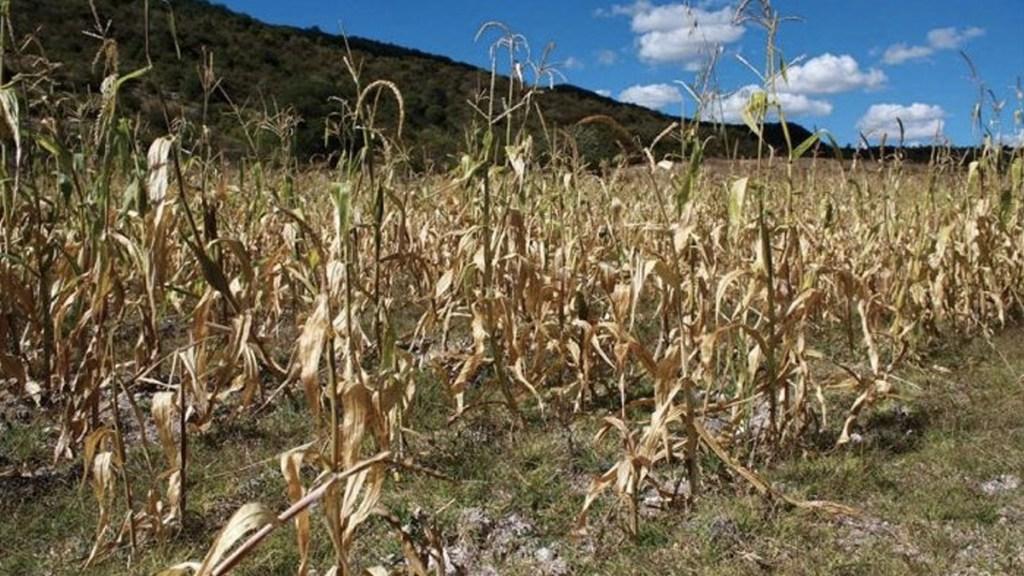 Sequía afecta al menos 20 municipios de Veracruz - Foto de Internet