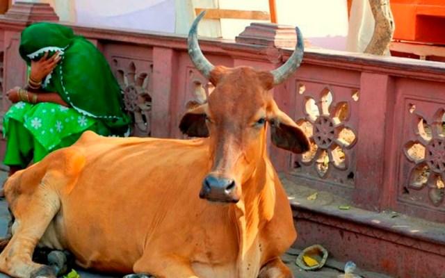 Linchan a musulmán por alimentar vacas en India - Foto de internet