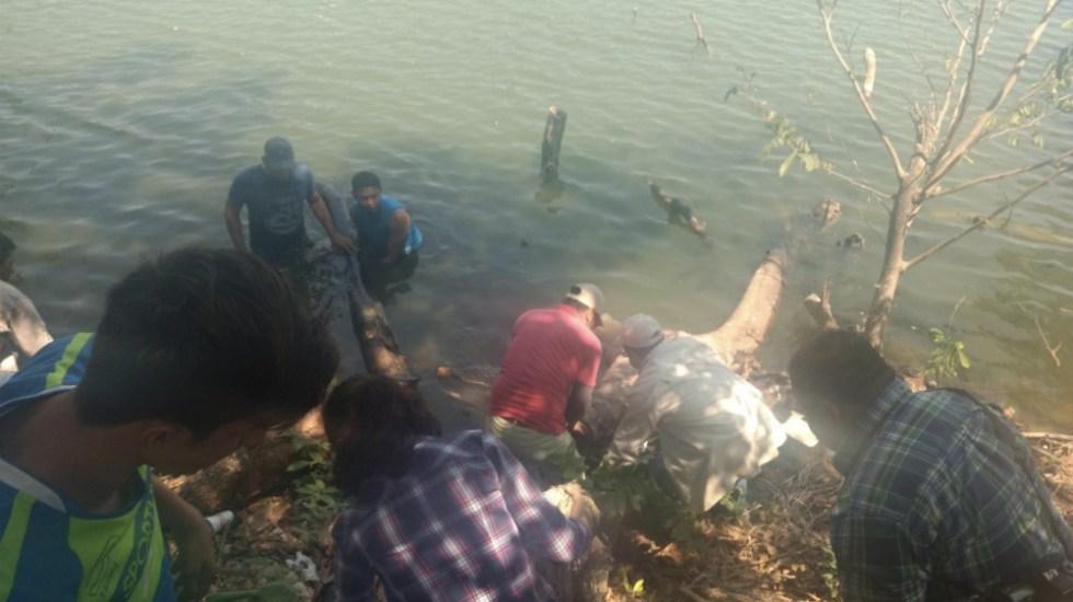 Por calor y sequía, muerte de manatíes en Tabasco: Semarnat - Foto de @VilloReyes